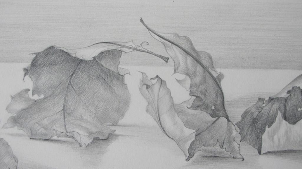 carolannmorley-leaves