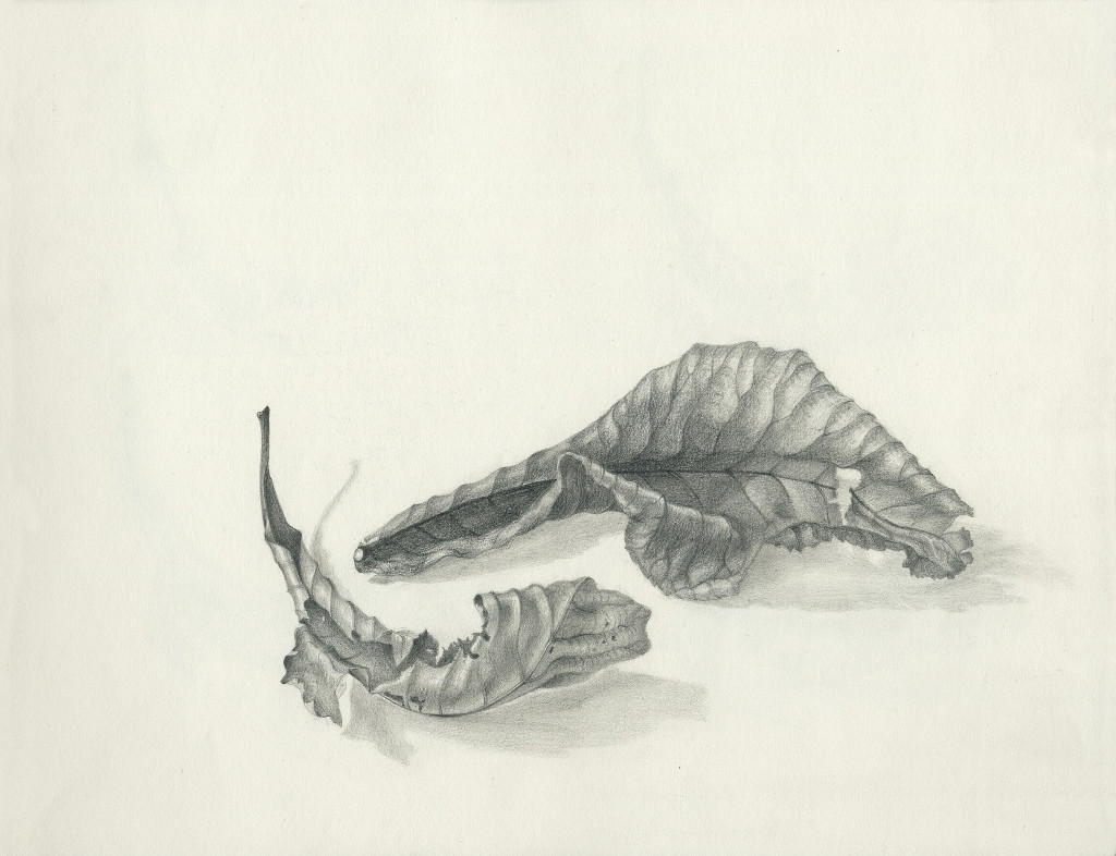 Tonal Leaves Number 2