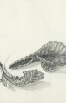 Tonal leaves – in repose