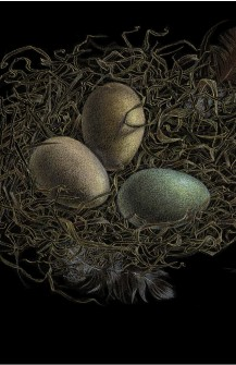 Nest of Eggs