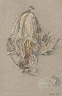 Corn Feather